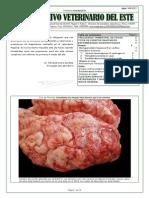 Archivo Veterinario Del Este - 3y4T_2012