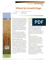 Wheat Growth Stage
