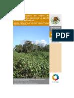 Balance Energetico Cultivo de Higuerilla Para Producir Biodiesel