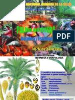 Clase 3 Botanica Morfologia Fisiologia de Palma