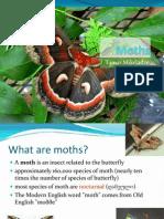 Moths (presentation)
