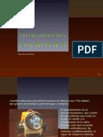 11-Fotosíntesis Humana [cr]