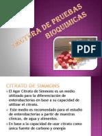 Lectura de Pruebas Bioquimicas y Antibiograma de Gram Positivos