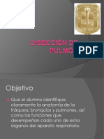 Diseccion de Pulmon