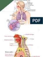 06aparato_respiratorio_1011txt.ppt