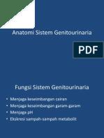 Anatomi Sistem Genitourinaria