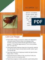 PRESENTASI BIOLOGI-PINJAL