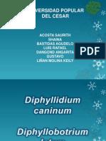 Equinococcus Granulosus, Diphyllobotrium Latum