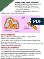 pathologyofpharynx-130902032202-phpapp01