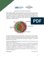 Hongos Patologias Invernales.1.pdf