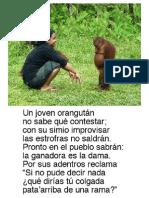 2.3 Un Joven Orangután