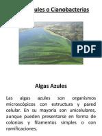 Algas Azules o Cianobacterias