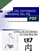 Canal Del Estomago 16-02