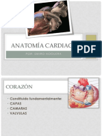 Anatomía cardiaca-Semio