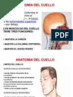 Anatomia Cabeza y Cuello