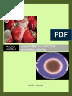 MGII_Practica_7_Aislamiento-de-hongos-de-diferentes-fuentes.pdf
