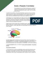 Áreas Cerebrais e Funções