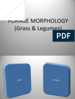 Forage Morphology