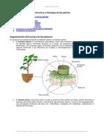 Estructura y Fisiologia Plantas