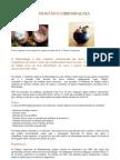 Mangostao-Fibromialgia