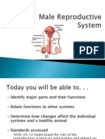 2 male reproductive system