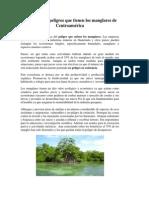 cuales son los peligros que tienen los manglares de Centroamérica