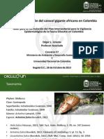 2 Estado de la invasión del caracol gigante africano en Colombia