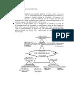 Bases teóricas de la psicomotricidad resumen