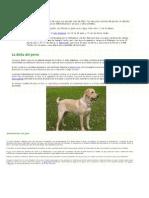 Animales Domesticos, Salvajes y de Granja
