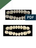 dentes formas