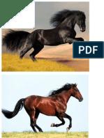 Papa de Running Horses