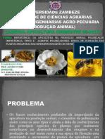 JOB1-TELIS A. CUMBE-APICULTURA-SEMESTRE 08.pptx