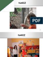 narizysenosparanasales02-101017190914-phpapp02