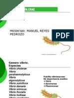 Diapositivas de Vibrio Cholerae