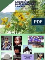 Prospectiva Del Sector de PMAC y Afines Noviembre 2011