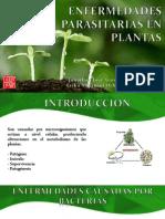 Enfermedades Parasitarias en Plantas