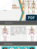 Presentacion SIstema Esqueletico