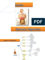 anatomiadelaparatodigestivo-111121105145-phpapp02