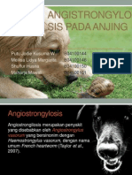 Angistrongylosis Pada Anjing