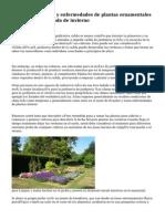 Jardineria y plagas y enfermedades de plantas ornamentales durante la temporada de invierno