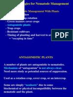 Antagonistic Plants for Nematode Management