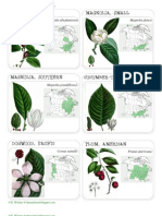 Tree Identification Cards
