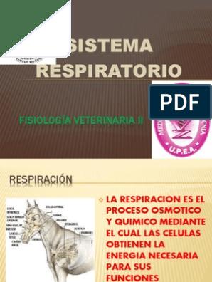 Fisiología Veterinaria Ii Pptx