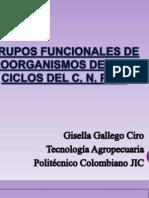 Grupos Funcionales de Microorganismos Del Suelo
