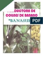 Productora de Colines de Banano