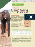 investigating elephant tracks