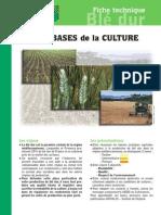 Les_Bases_Culture_Blé_Dur