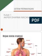 Anatomi Dan Fisiologi Bernafas