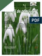 Armonii de Primavara (2)