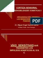 CORTEZA SENSORIAL, SENSACIONES SOMÁTICAS I, DERMATOMAS - copia 2 (2).pdf